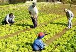 SEDUC Divulga Chamada Pública para Aquisição de Gêneros da Agricultura Familiar pelo Programa Nacional de Alimentação Escolar